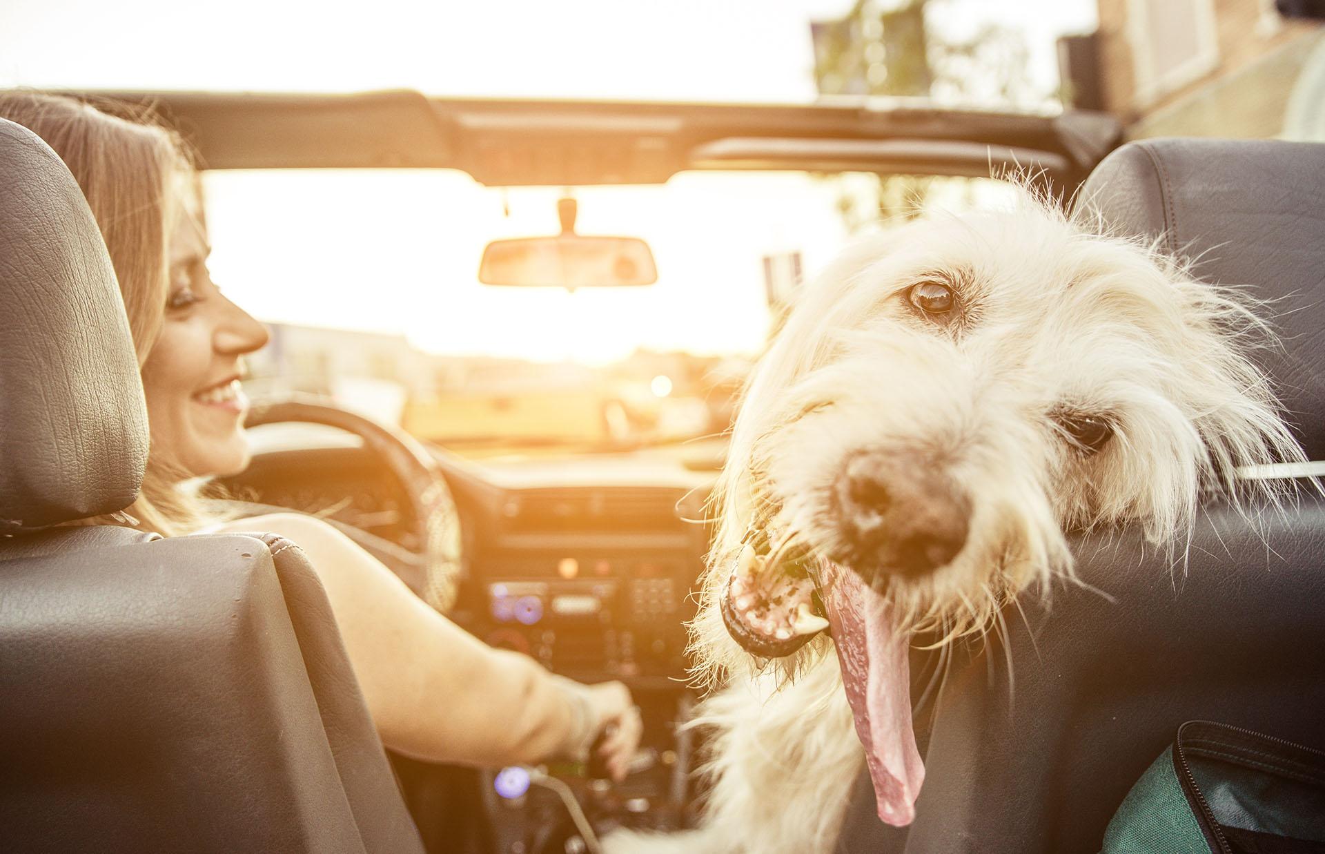 Cestujete se zvířetem? Myslete na pojištění mazlíčků
